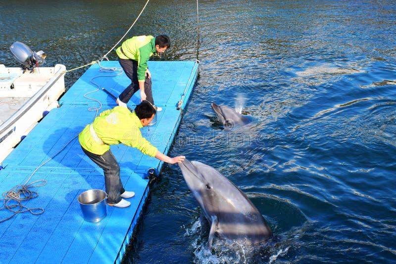 Twee Japanse trainers leiden de dolfijnen in Japan Kagoshima op stock foto