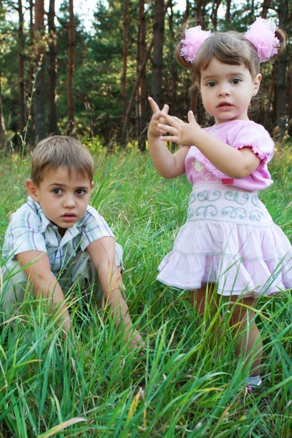 Twee jonge geitjes in een hout stock foto