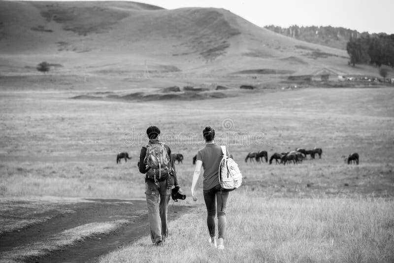 Twee jonge meisjes met rugzakken en fotocamera op landelijke weg Het weiland van het paardlandbouwbedrijf met merrie en veulen Kl royalty-vrije stock afbeelding
