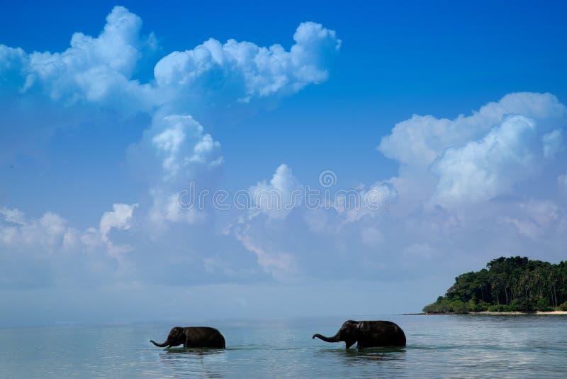 Twee jonge olifanten die in het overzees lopen stock fotografie