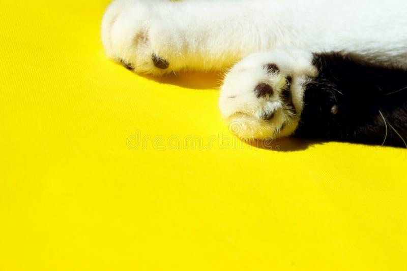Twee kat's paws op gele achtergrond Cat's Paw over kleurrijke achtergrond royalty-vrije stock afbeeldingen