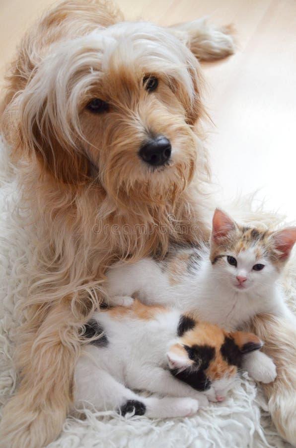 Twee katje met een hond, beste vrienden stock fotografie