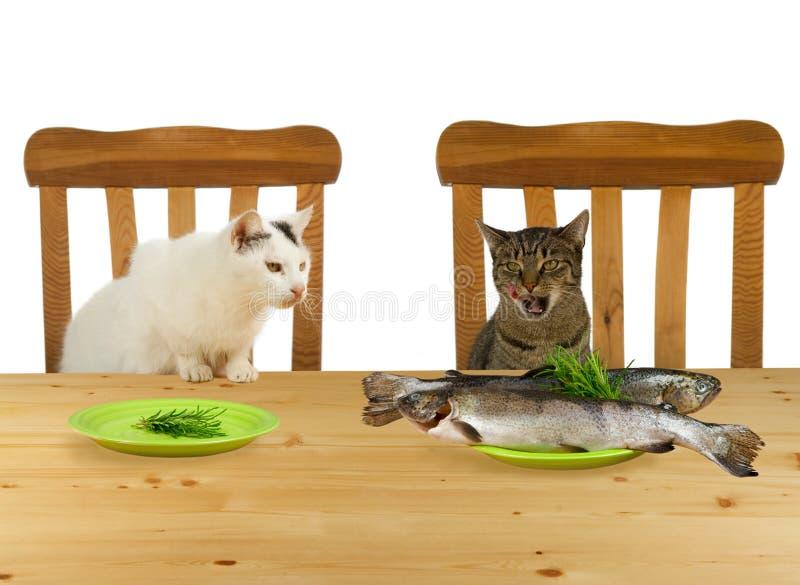 Twee katten die bij lijst zitten stock foto