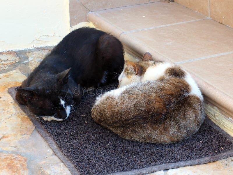Twee Katten die op een Mat slapen royalty-vrije stock foto