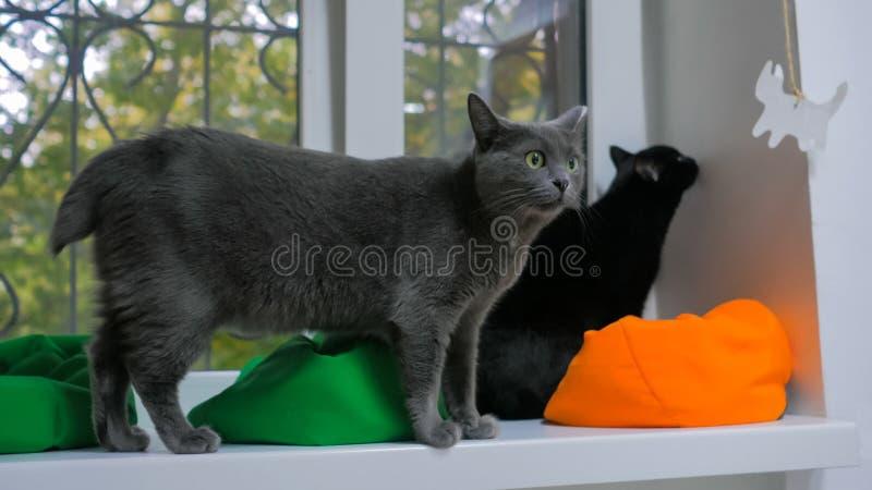 Twee katten die op vensterbank zitten stock fotografie