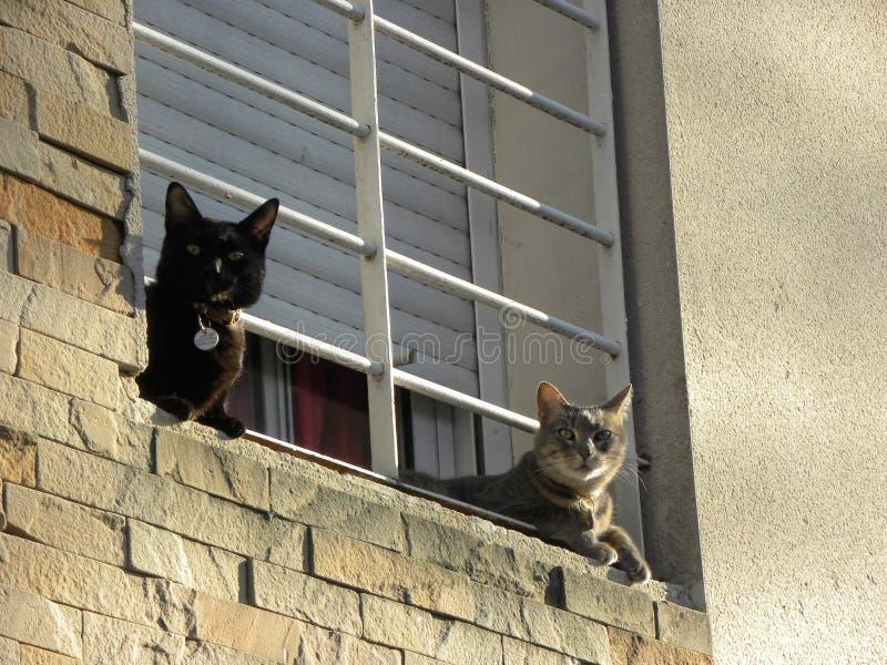 Twee katten in het venster van een huis royalty-vrije stock afbeelding