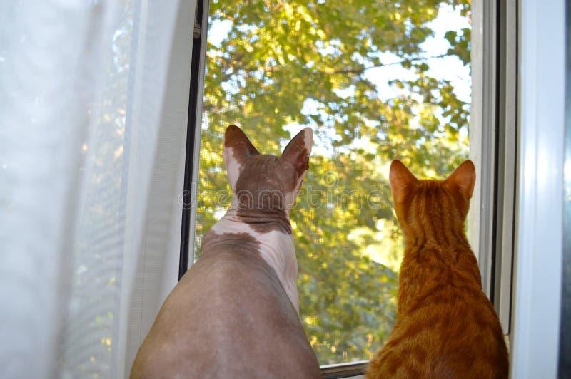 Twee katten kijken uit het venster royalty-vrije stock foto