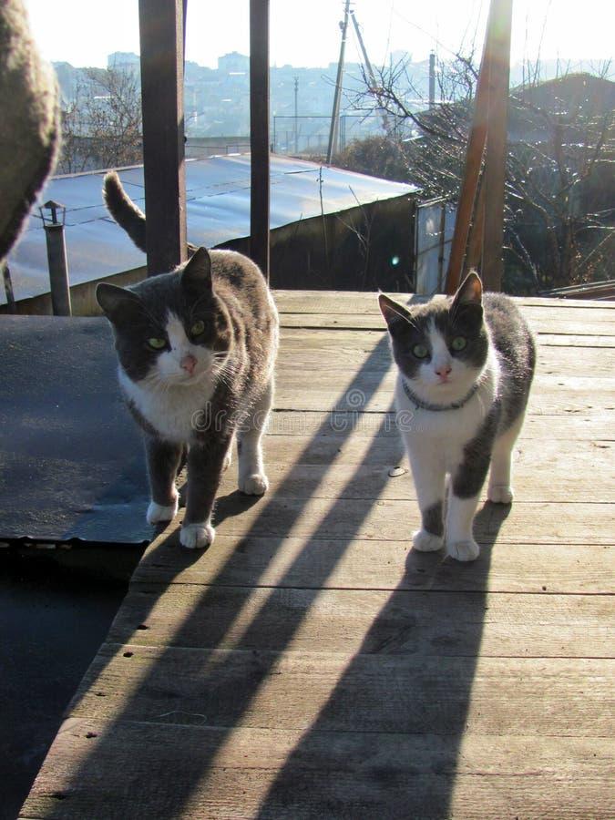 Twee katten op de portiek royalty-vrije stock foto's