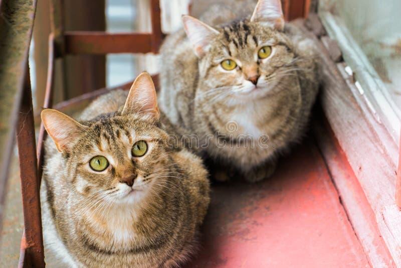 Twee katten op de vensterbank zusters royalty-vrije stock afbeelding
