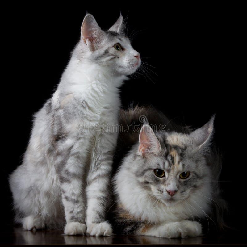 Twee katten op een lijst stock afbeeldingen