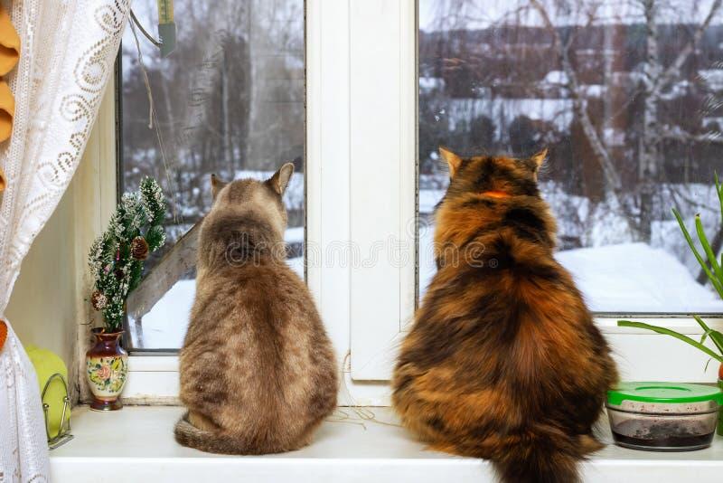 Twee katten zitten en kijken uit het venster royalty-vrije stock afbeeldingen