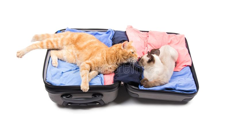 Twee kattenneus aan neus, die op een open bagage lounging stock afbeeldingen