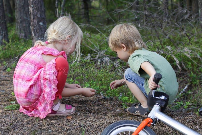 Twee kinderen die in bosjonge geitjes spelen die op kijken kleine insecten royalty-vrije stock afbeelding