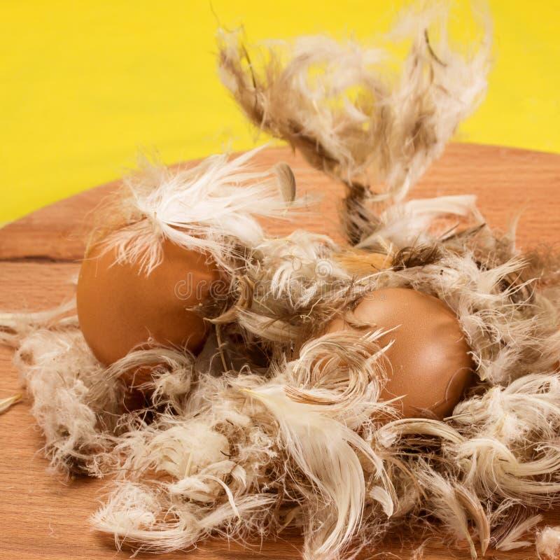 Twee kippeneieren met bruine shell en dalende veren stock foto