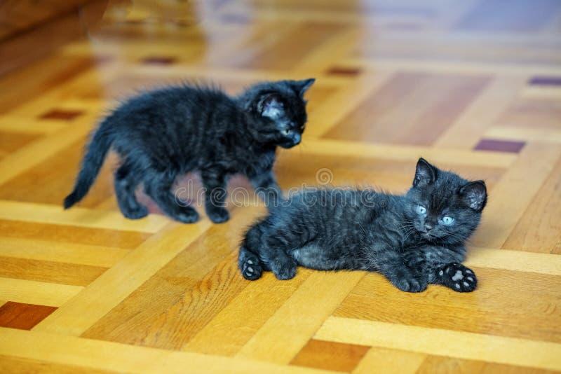 Twee klein zwart katjesspel op de vloer Huisdierenconcept royalty-vrije stock afbeeldingen