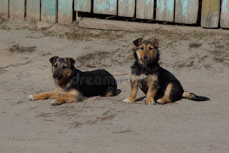 Twee kleine bruine honden liggen op de grijze zandweg royalty-vrije stock afbeelding