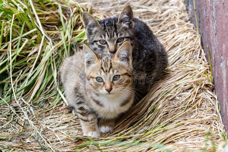Twee kleine gestreepte doen schrikken dakloze katjes die dichtbij de muur van huis zitten stock foto