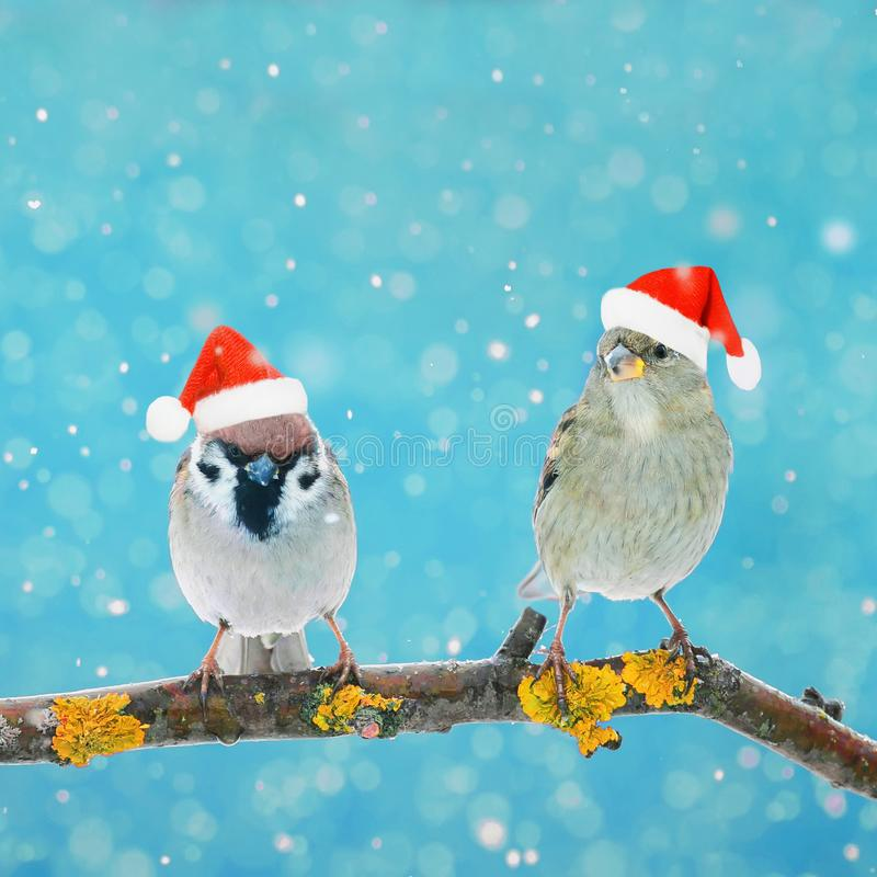 Twee kleine grappige vogels die op een tak in de winter in de sneeuw zitten royalty-vrije stock foto's