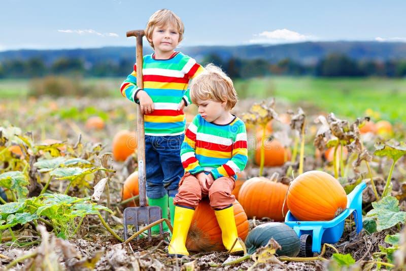 Twee kleine jonge geitjesjongens die pompoenen op Halloween-pompoenflard plukken Kinderen die op gebied van pompoen spelen De jon stock afbeelding
