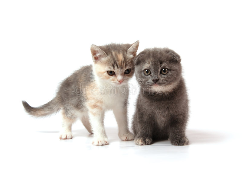 Twee kleine katjes royalty-vrije stock afbeelding