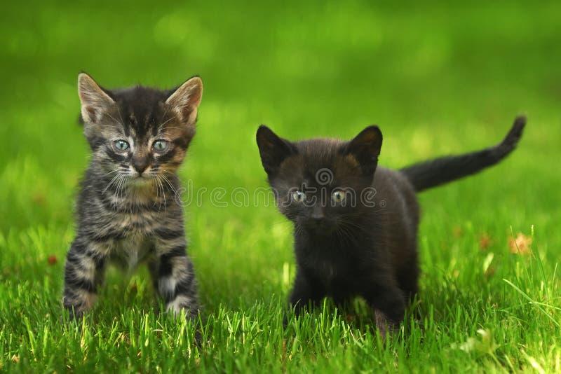 Twee kleine katjes. stock fotografie