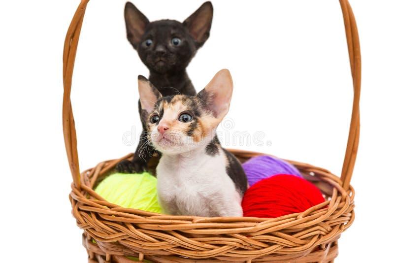Twee kleine katjes in een mand stock afbeeldingen