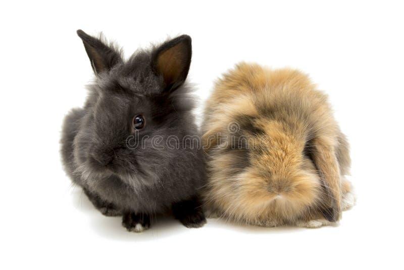 Twee kleine konijnen die op wit worden geïsoleerd stock foto