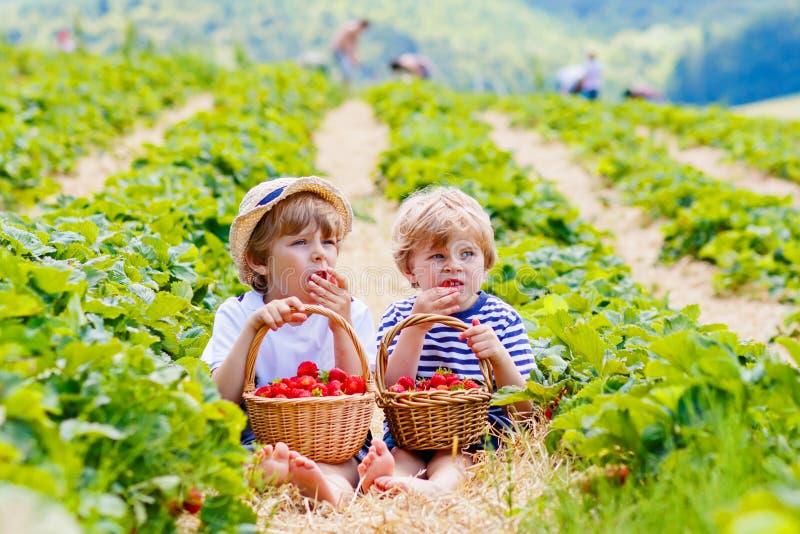 Twee kleine sibling jongens op aardbeilandbouwbedrijf in de zomer royalty-vrije stock fotografie