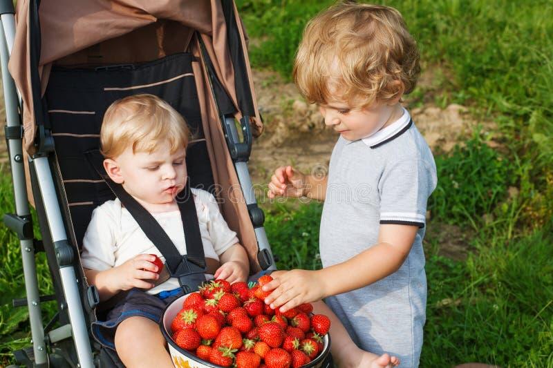 Twee kleine sibling jongens op oogst een landbouwbedrijf van de bessen organisch aardbei. stock afbeeldingen