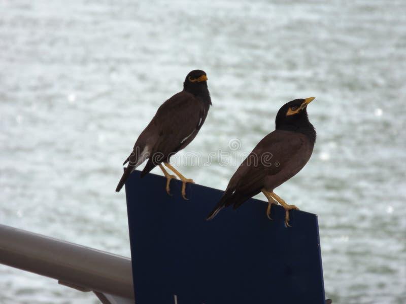 Twee Kleine Vogels royalty-vrije stock foto