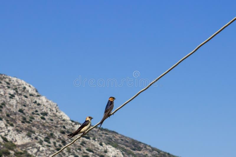 Twee kleine vogels die op een draad zitten Concept - liefde royalty-vrije stock afbeeldingen