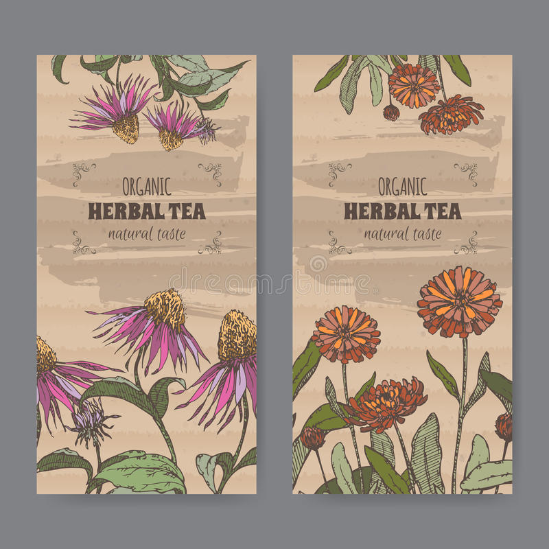 Twee kleuren uitstekende etiketten voor calendula en echinaceaaftreksel royalty-vrije illustratie