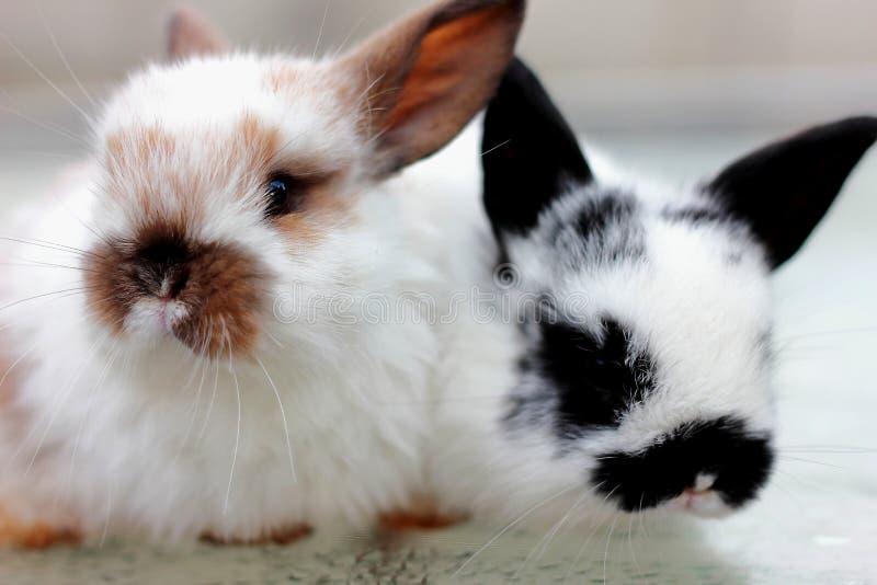 Twee konijnclose-up stock foto's