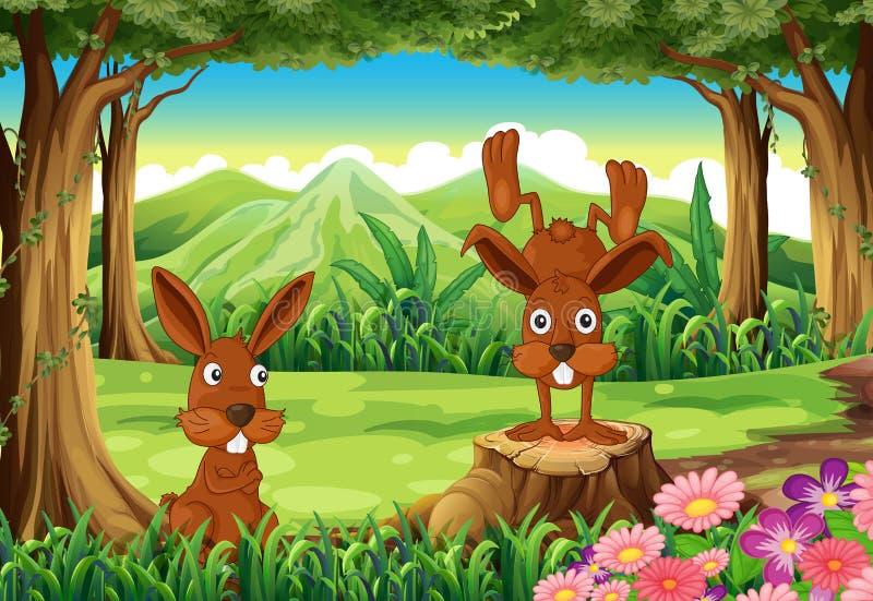 Twee konijnen bij het bos stock illustratie