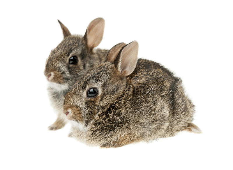 Twee konijnen van het babykonijntje stock fotografie