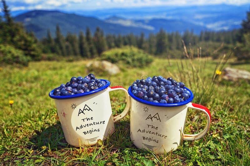 Twee koppen bosbessen op achtergrond van zonnige bergengras en heuvels royalty-vrije stock fotografie