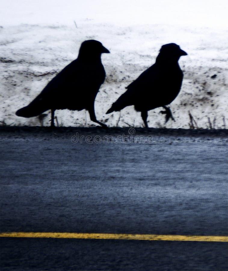 Twee kraaien in silhouet op de winterkant van de weg stock afbeeldingen