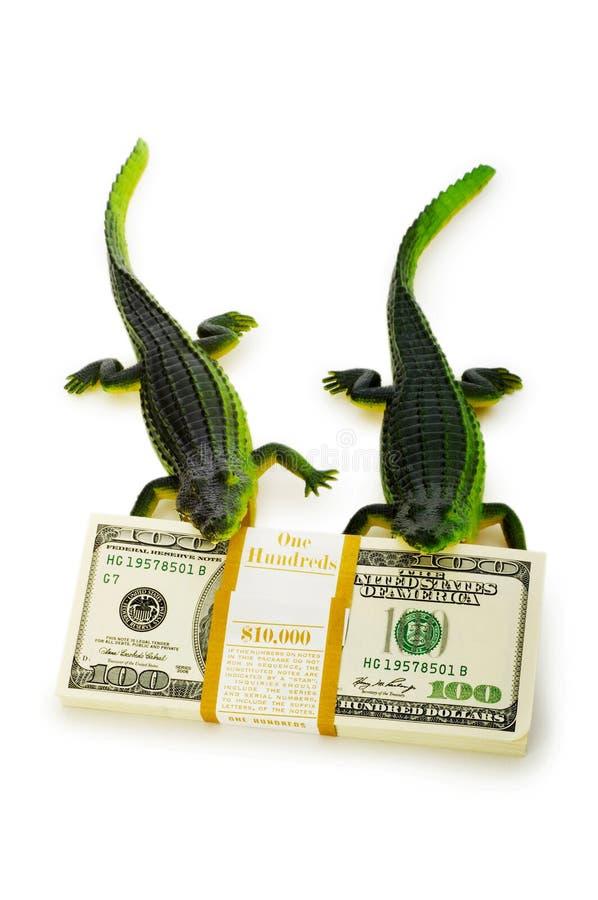 Twee krokodillen stock foto's