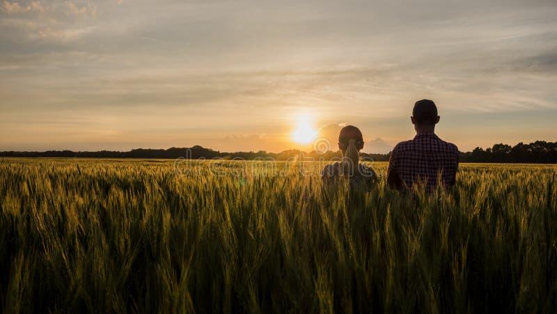 Twee landbouwers, een man en een vrouw, verheugen zich op de zonsondergang over een gebied van tarwe Groepswerk in landbouwindust royalty-vrije stock foto's