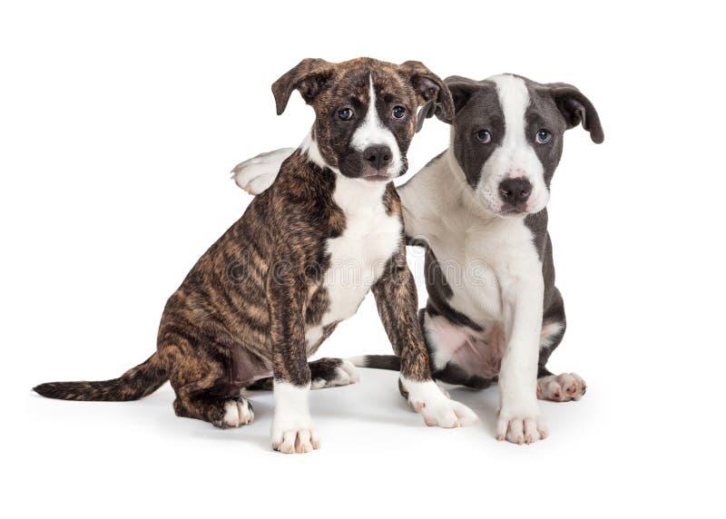 Twee Leuk Puppywapen rond elkaar royalty-vrije stock foto