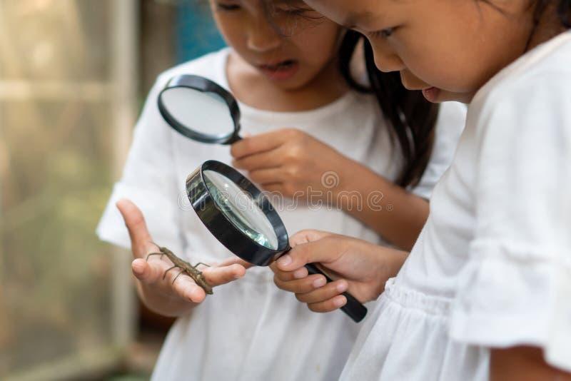 Twee leuke Aziatische kindmeisjes die vergrootglas met behulp van die en op sprinkhaan letten op leren die op hand met nieuwsgier stock foto's