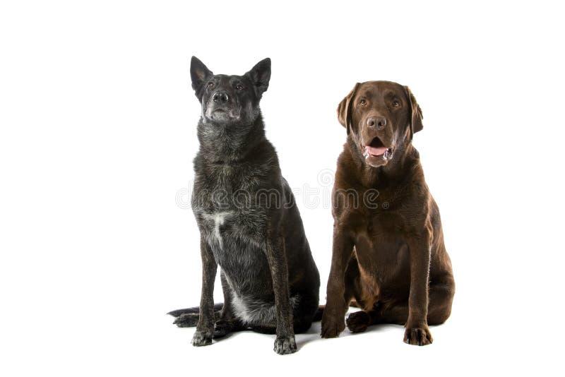 Twee leuke honden royalty-vrije stock afbeelding