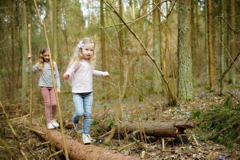 Twee leuke jonge zusters die pret hebben tijdens bosstijging op mooie vroege de lentedag Actieve familievrije tijd met jonge geit royalty-vrije stock afbeelding