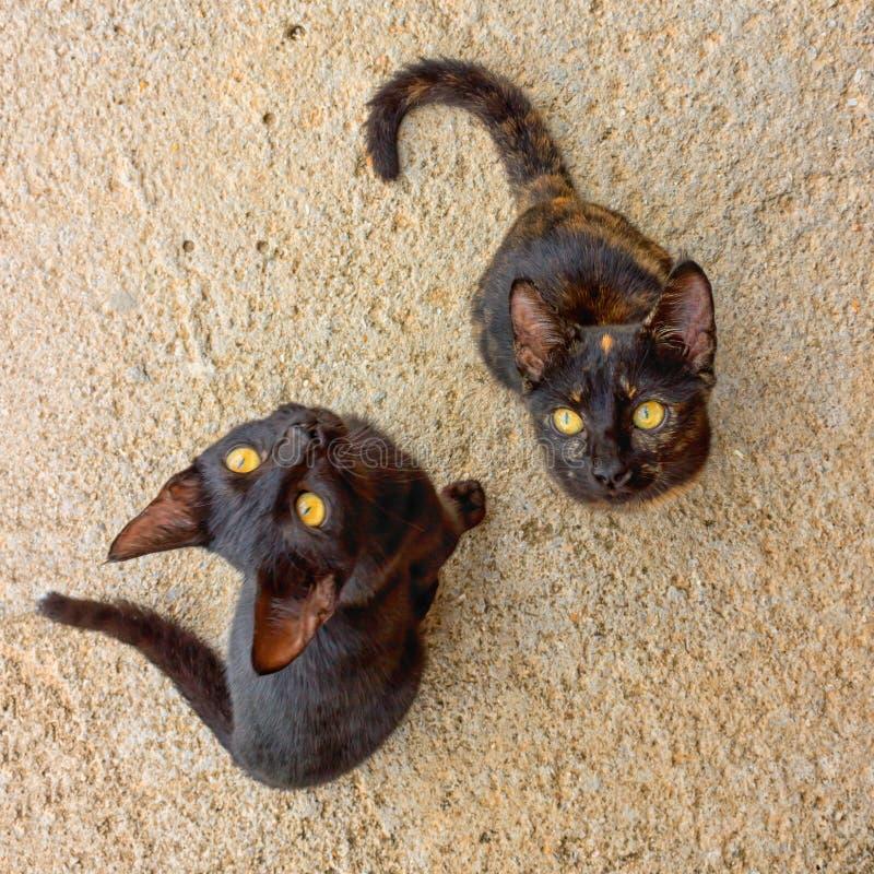 Twee leuke katjes die voor voedsel bedelen stock foto's