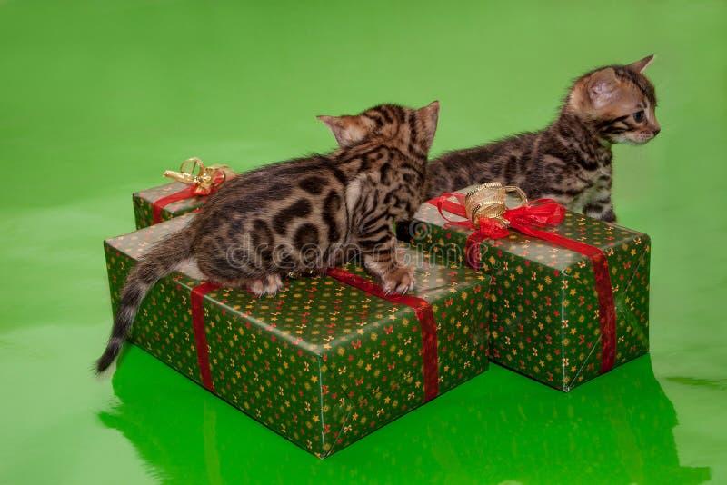 Twee leuke katjes van Bengalen en hun Nieuwjaar` s giften Traditionele vakantie royalty-vrije stock foto's