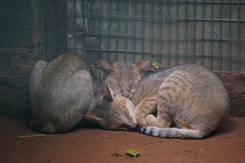 Twee leuke katten stock afbeeldingen