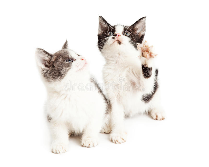 Twee leuke kleine speelse katjes stock foto