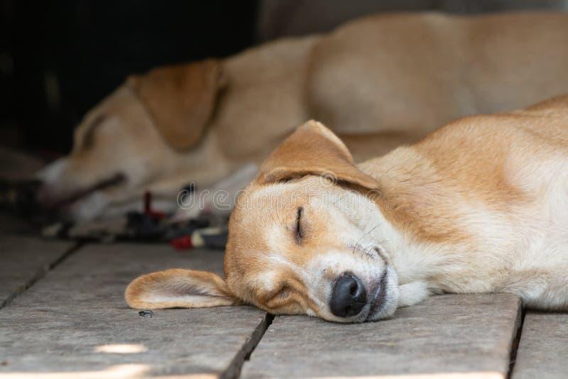 Twee leuke rode honden die op de houten portiek slapen royalty-vrije stock foto