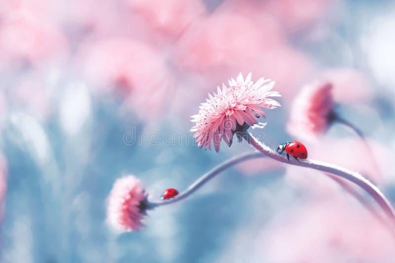 Twee lieveheersbeestjes op een roze de lentebloem tegen blauwe achtergrond Artistiek macrobeeld De zomer van de conceptenlente stock foto