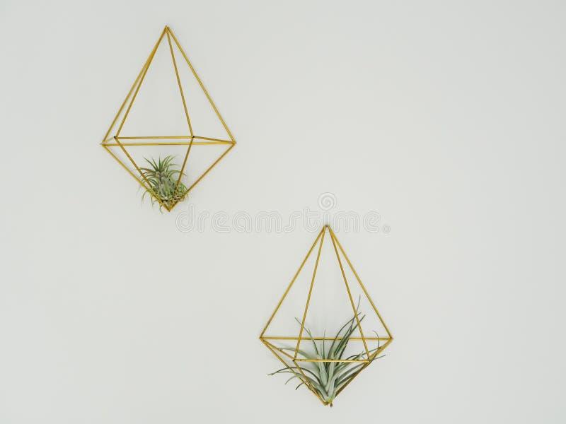 Twee luchtinstallaties of Tillandsia-bromeliaceae stock foto